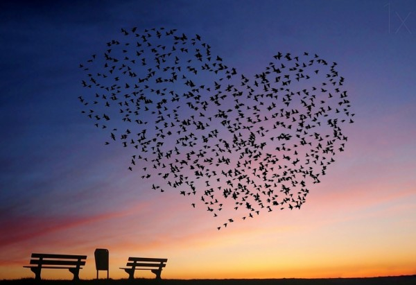 love-is-in-the-air-600x411